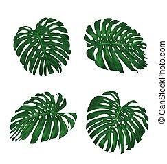 Monstera leaves.