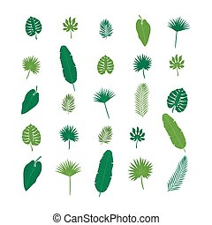 Set of tropical leaves. Nature elements for your design