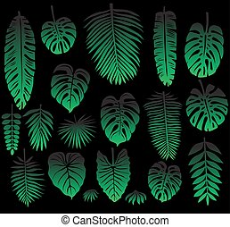 Set of Tropical Leaves on black