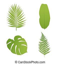 Set of tropical leaves. Palm,banana