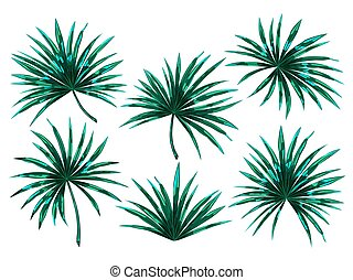 Set of tropical palm leaves.