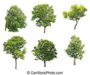 set of tropical tree on white background