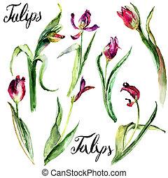Set of Tulips flowers