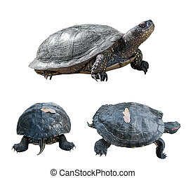 Set of turtles. turtles from different sides.