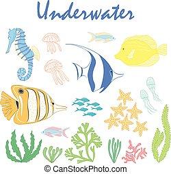 Set of underwater design elements. Sea fish. Vector design elements: sea fishes,