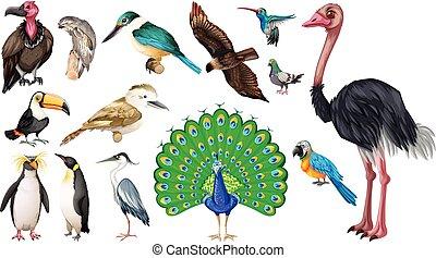 Set of vareties of wild birds