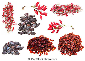 set of various berberis fruits isolated