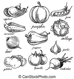 Set of various doodles, hand drawn vegetables. - Set of...