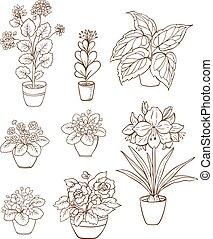 Set of various houseplants
