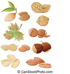 set of various nuts - set of vector various nuts