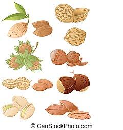 set of various nuts - set of vector various nuts