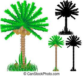 Set of various palms