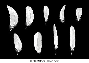 Set of various white bird feathers on a black background.