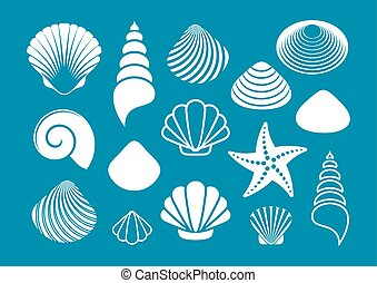 set-of-various-white-sea-shells-and-starfish.eps