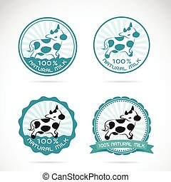 Set of vector an dairy cows label on white background