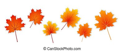 Set of vector autumn maple leaves.