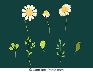 Set of vector daisy flowers and leaves