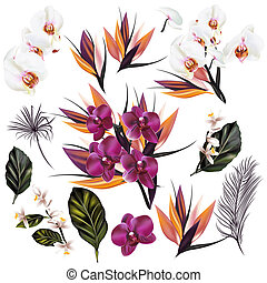 Set of vector detailed orchid flowers and palm leafs - A...