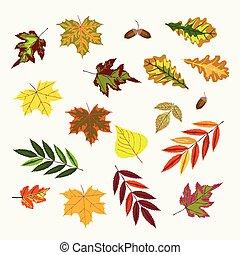Set of vector fall rowan, viburnum, oak, betula green,...