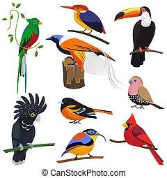 Set of vector flat cartoon tropical exotic birds set.