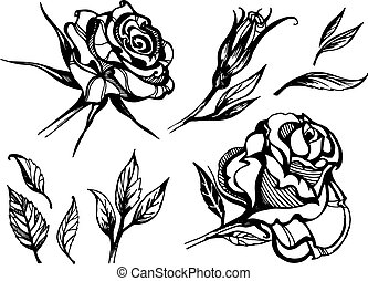 Set of vector floral design elements, freehand drawing -...