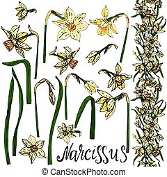 Set of vector hand drawing Narcissus flowers.