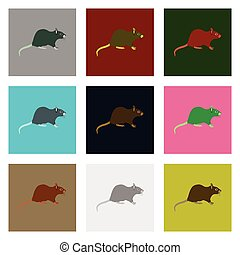 Set of vector illustration in flat style rat