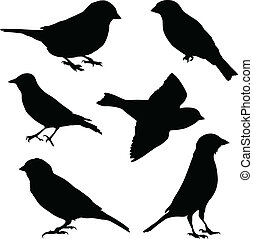Set of vector images sparrow