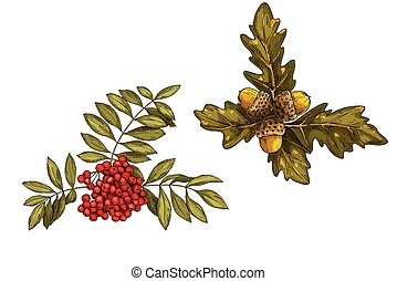 Set of vector leaves in autumn style. Branch of rowan and...
