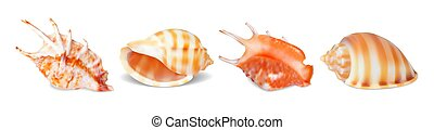 Set of vector seashells - Set of vector illustrations...