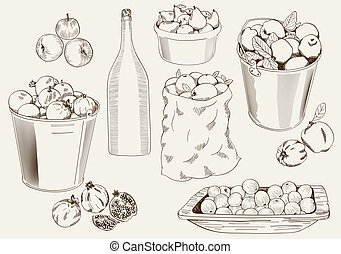 set of vector sketches of ripe fruit harvested for the production of homemade wine