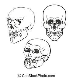 Set of vector skulls on white background