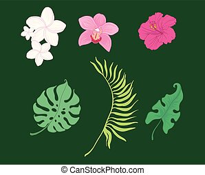 Set of vector tropical flowers and leaves