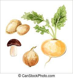 Set of vector watercolor vegetables. Potato, onion, mushroom, turnip