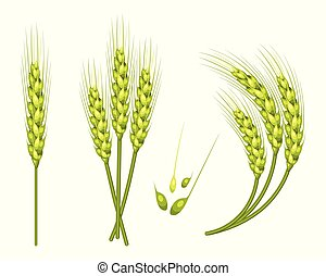 Set of vector wheat in 3d isolated white background with seed addition. Vector.