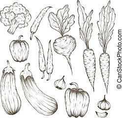 Set of vegetables and plants hand drawn vector illustration