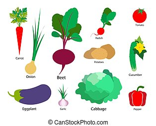 Set of vegetables on a white isolated background. Vector illustration.