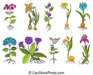 Set of Vintage Flowers - hand drawn - in vector