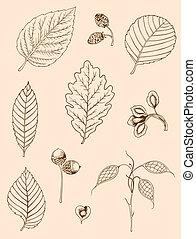 Set of vintage leaves