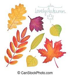 Set of watercolor autumn leaves. Oak, maple, birch, rowan, ...