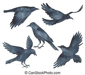 Set of watercolor Raven black birds.