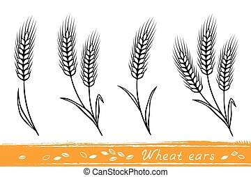 set of wheat ears