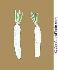 White daikon radish , sketch vector. - set of White daikon...