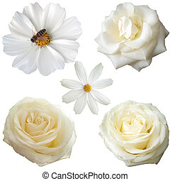 Set of 5 white flower heads isolated on white background