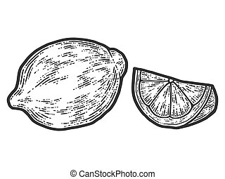 Set of whole lemon and slice. Sketch scratch board imitation. Black and white.