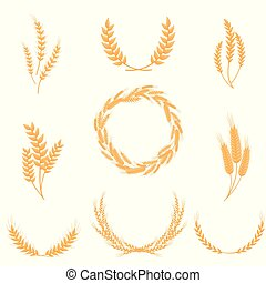 Set of whole wheat ears. Vector illustration on white background.
