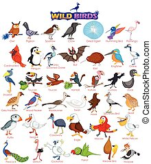 Set of wide variety of wild birds in vector