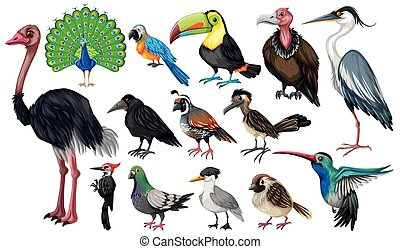 Set of wild birds illustration