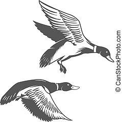 Set of wild ducks icons isolated on white background. Design ele