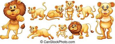 Set of wild lions